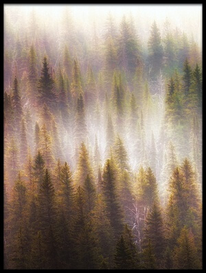 Buy this art print titled Misty Forest II by the artist Atul Chopra
