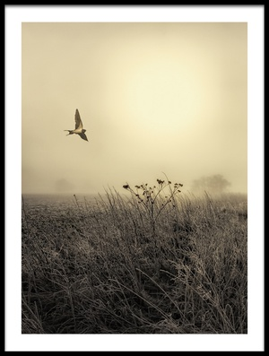 Buy this art print titled Morning Mood by the artist Kent Mathiesen