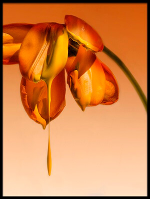 Buy this art print titled Tears of a Flower by the artist Kent Mathiesen