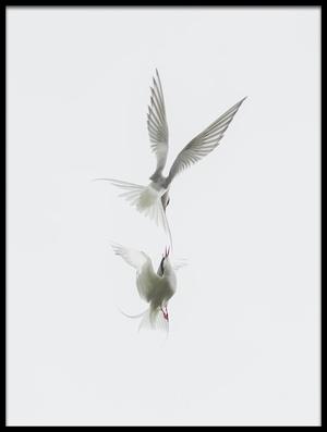 Buy this art print titled Tern by the artist Jure Kravanja