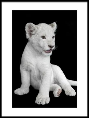 Buy this art print titled White Lion Cub by the artist David williams