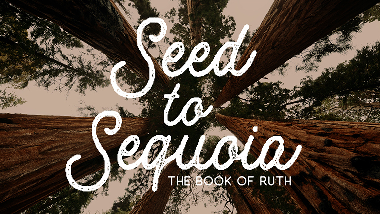 Seed to Sequoia