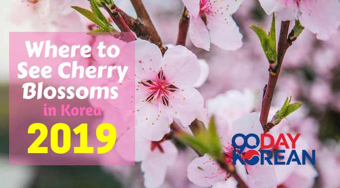 Where To See Cherry Blossoms In Korea 2019
