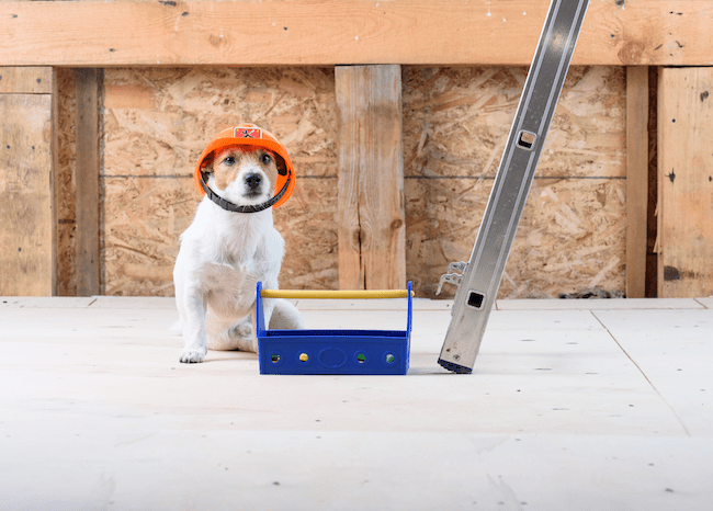Pet Safety Around Construction Sites, Renovation Projects, and Heavy Equipment