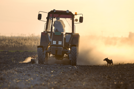 Dog near farm equipment