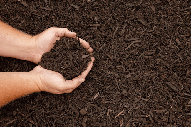 How To Make The Best Mulch For A Vegetable Garden Bigrentz