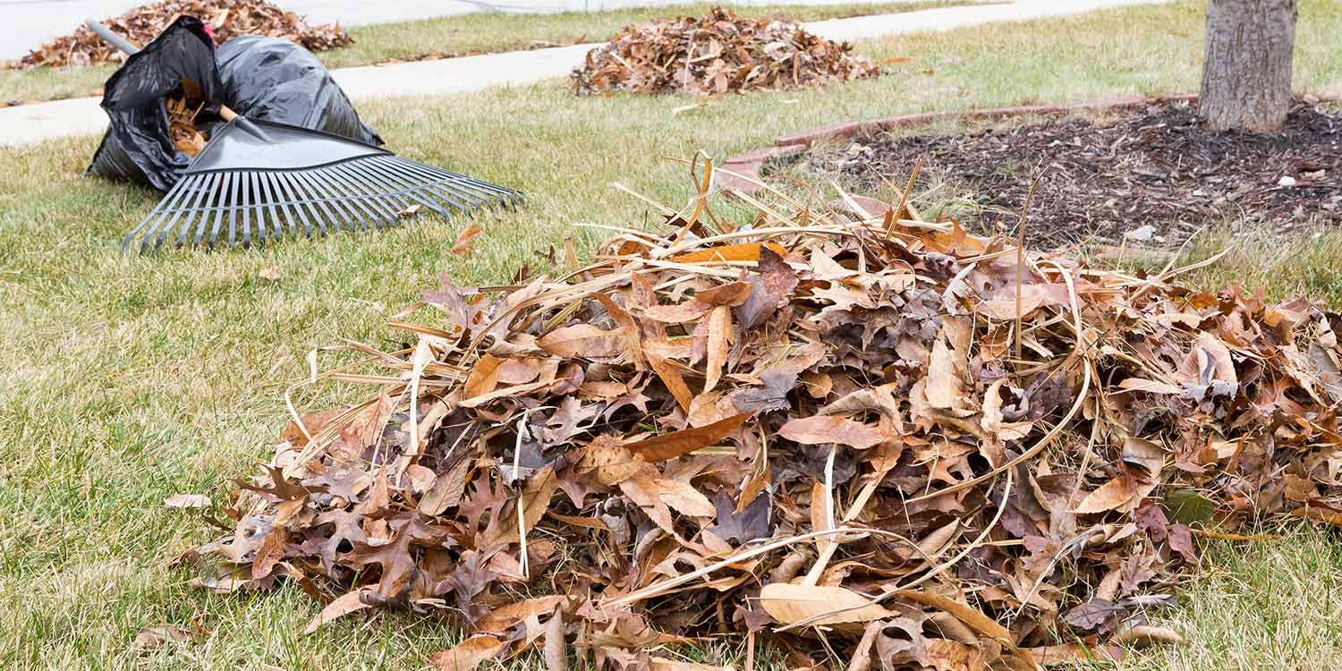 Dead leaves and yard waste on a lawn