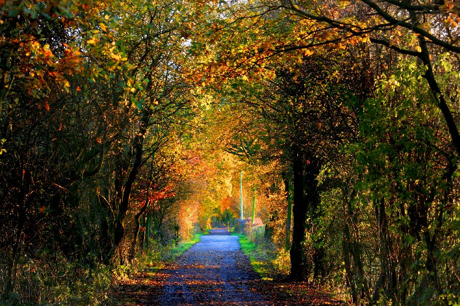 Autumn is upon us as this road leads through trees shedding their leaves