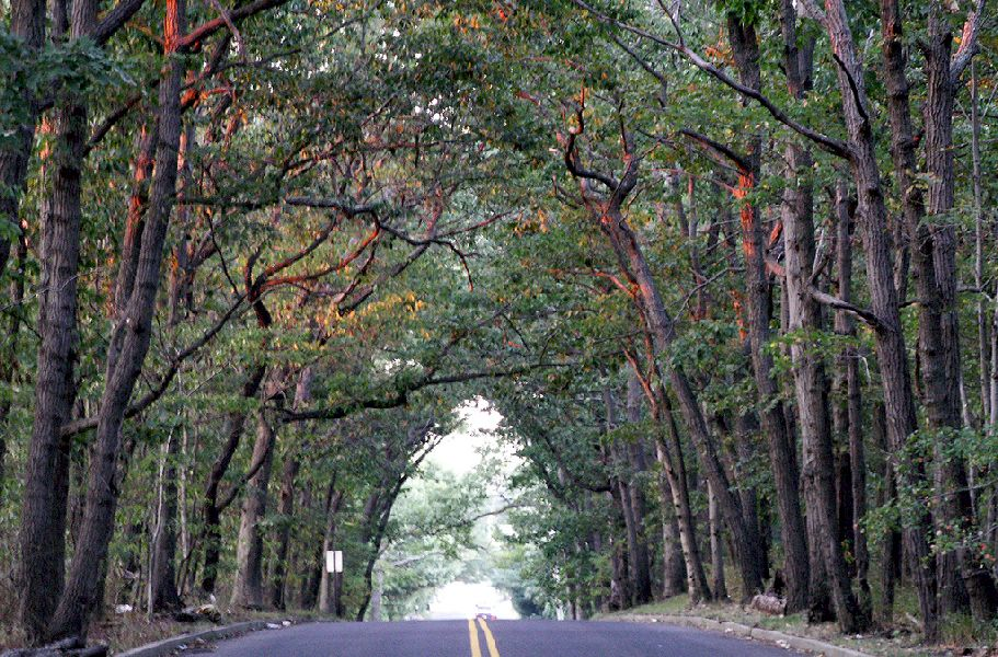 A relaxing drive through a tree tunnel at Hope Road Wayside, NJ
