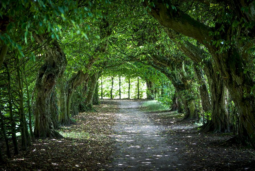 A tunnel created by green trees