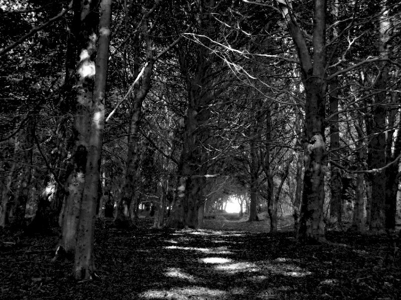 A dark and eerie woodland with tunnel leading to daylight on the other side