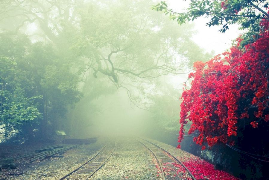 Vibrant Red Flowers and a Misty Rail track