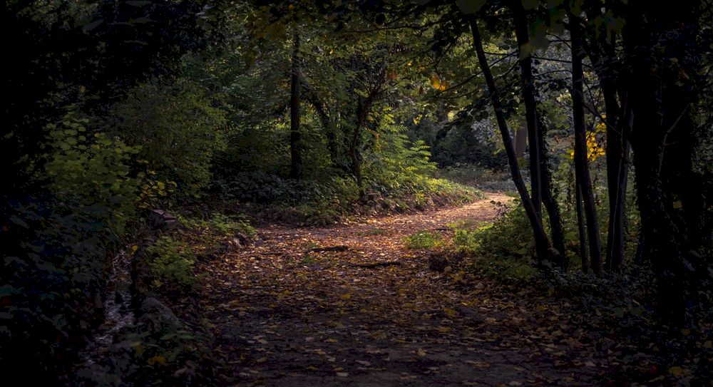 A leaf littered Forrest Floor leads the way deep into the woods