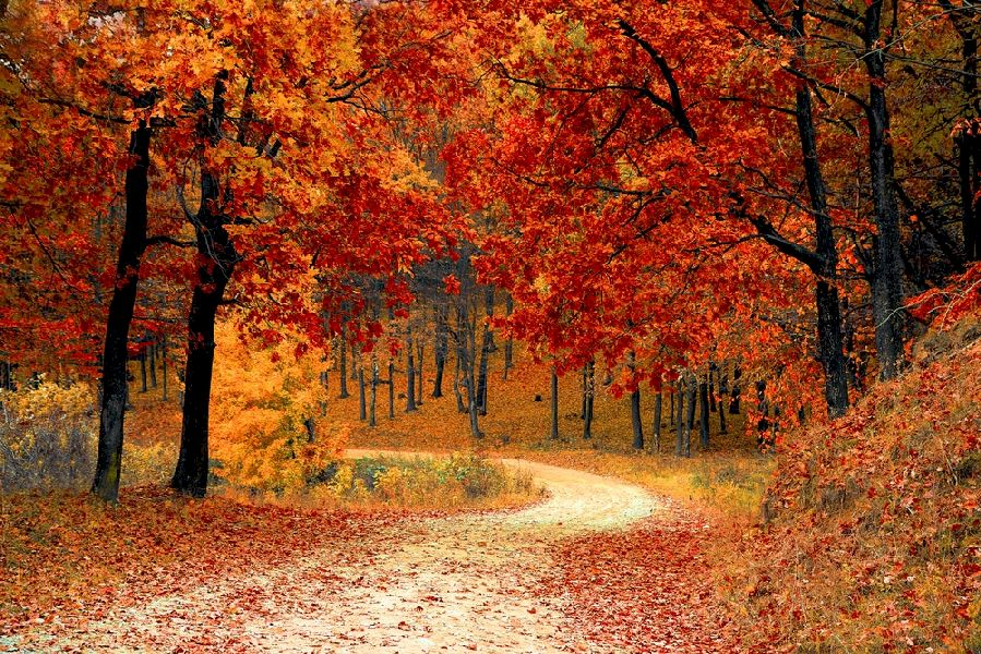 Beautiful orange and red autumn forrest with winding pathway