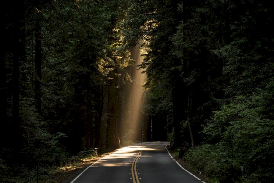 The darkness is broken by a blast of light shining down through the tree canopy