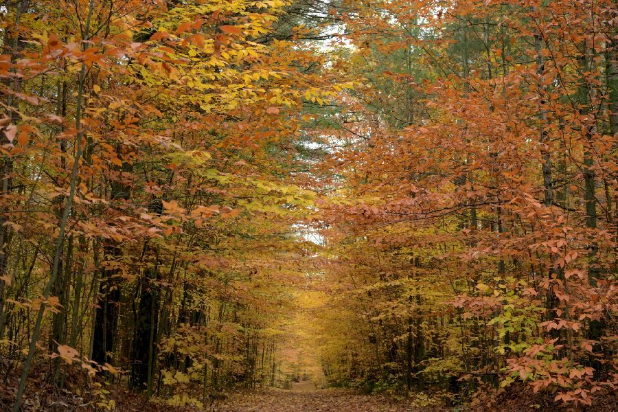 Red, Orange and Brown Autumnal Tree Tunnel