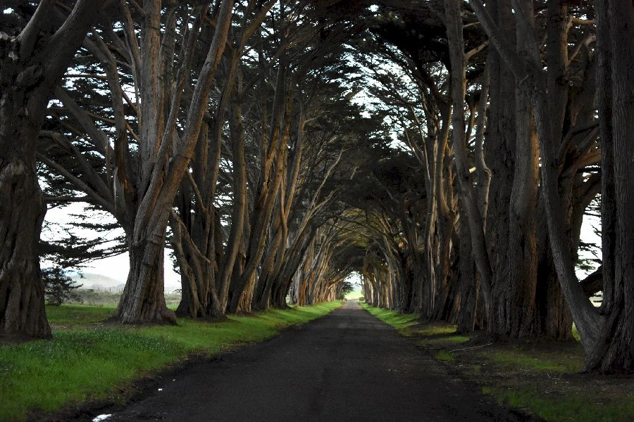 A narrow road with dar trees creating a tunnel to the light