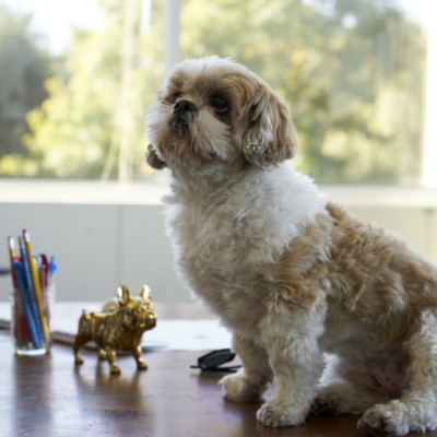 Hey, Buddy! Why We Love Dogs at Work