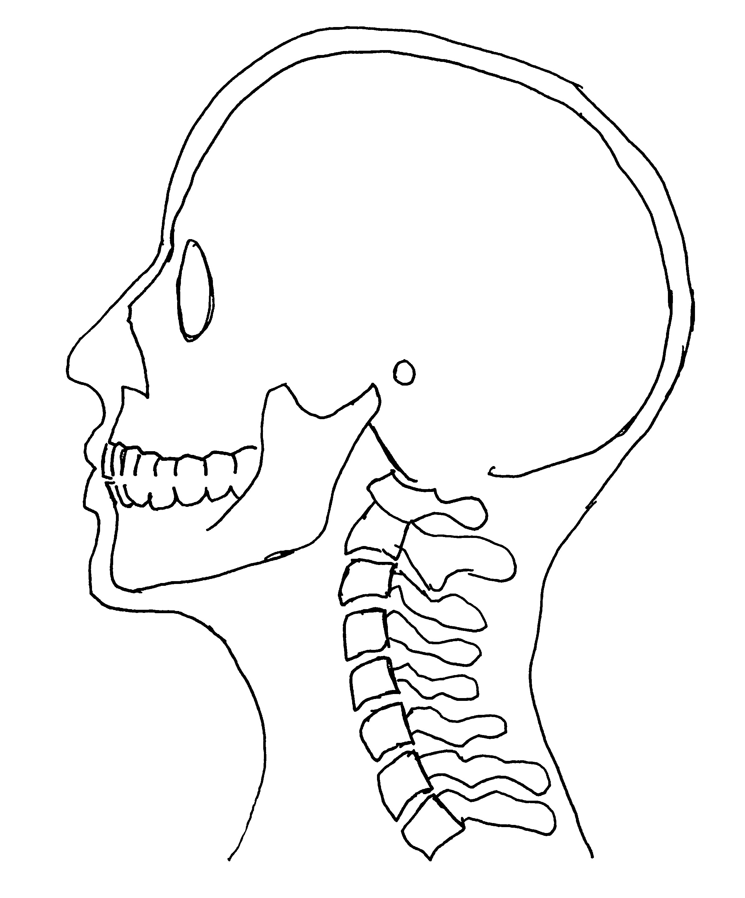 view of head and neck from side