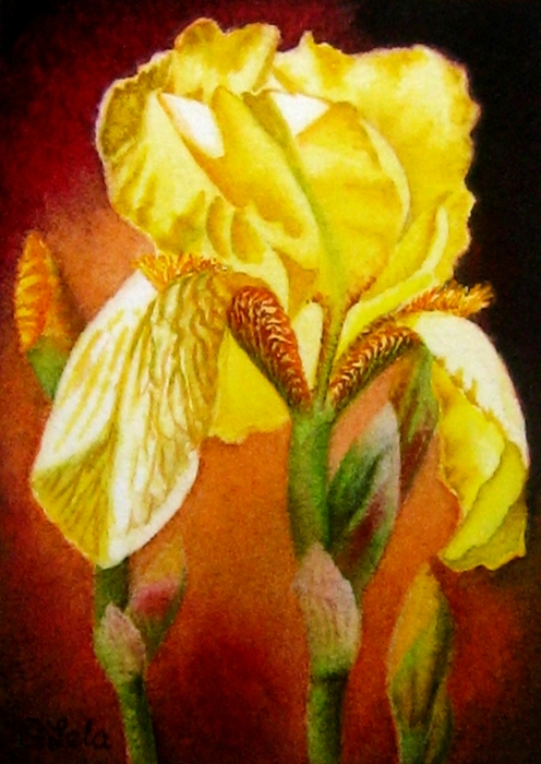 Original Watercolor Painting - Yellow Iris