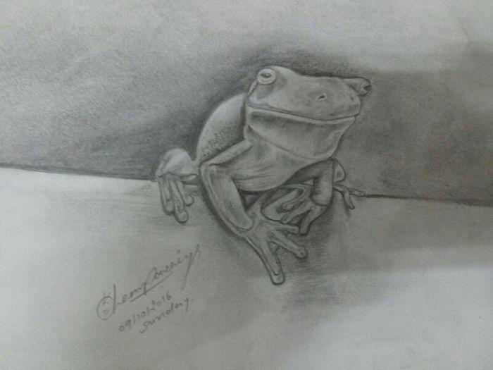 The frog muvment