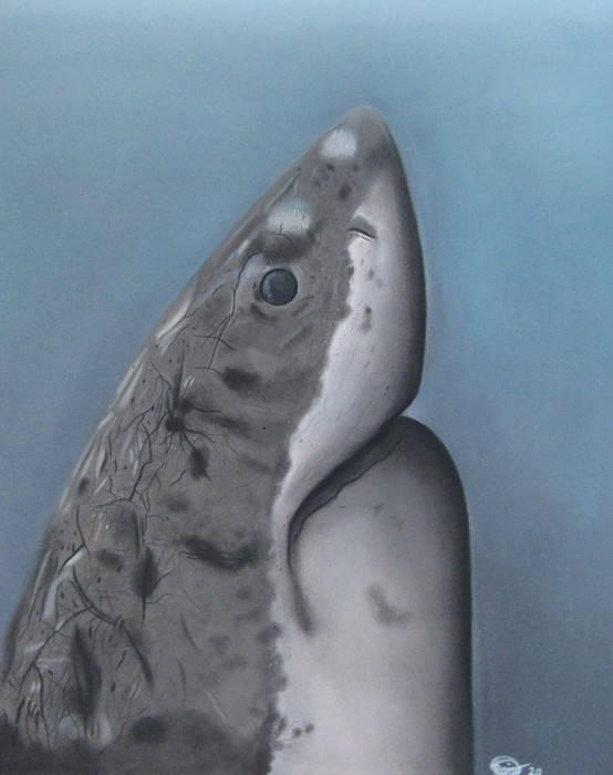 The great white shark Pastel drawing.