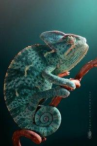 Chameleon Amour