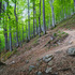 Forest on Balkan Mountain, Bulgaria