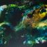 Nebula Golden Course