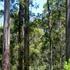 Tall Timber Study 1