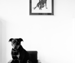 Jonny Thompson Photography 'Portrait of Dexter'