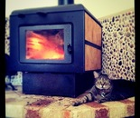 Kali Cat and the Fire