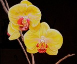 Yello Orchids