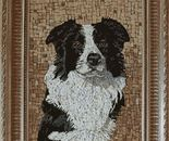 Portrait of a Border Collie