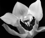 Erotic Floral #2