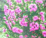 Flores ao sol