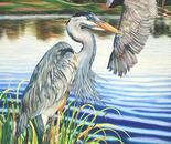 """""""Great Blue Herons"""""""