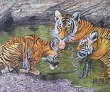 Three Tigers Bathing