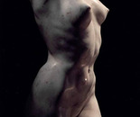 """The torso"""