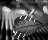 Music of Light 02