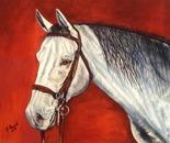 Il mio Cavallo