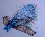Uccellino Blu