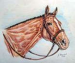 Studio grafico di un cavallo