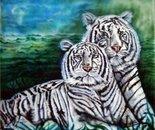 Tigri Albine