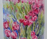 una macchia di tulipani