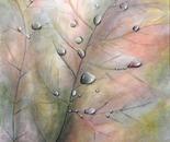 GOCCE DI RUGIADA (oil on canvas 70x50x4)