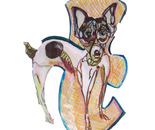 T is for Toy Fox Terrier