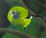 Bellbird, Koromiko