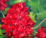 Flowers - Geranium