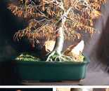Autumn Bonsai  - Wire Tree Sculpture